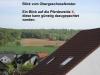 **VERKAUFT**Hallo Pferdebesitzer ! Traumhafte modernisierte Hofreite mit 4 Pferdeboxen in Mosbach - Blick auf eine der Pferdeweiden vom Haus aus gesehen