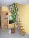 **VERKAUFT** Doppelhausperle in Feldrandlage m. Garage u. 2 Wohneinheiten. - Exklusive Ausstattung in Niedrigenergiebauweise - Treppe vom Obergeschoss in ausgebaute Studio