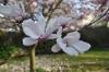 **VERKAUFT**DIETZ: Mosbach, freistehender Walmdachbungalow  mit ausgebautem Dachgeschoss! - Der Garten im Frühling